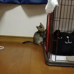 「先住猫の茶々くんと新入り保護猫くん」サムネイル2