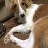 ミックス犬 サムネイル2