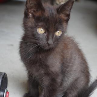 元気いっぱいの黒猫です