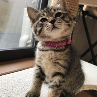 トライアル決定!飼いやすい美猫の女の子!