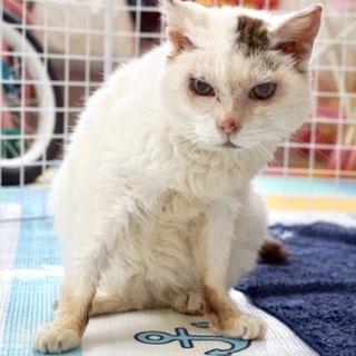 保護猫 推定10歳以上 おばあちゃん猫です!