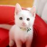 ゴロスリータ白猫【リパン】