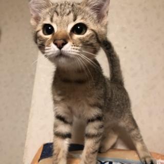 可愛い女の仔の子猫さん