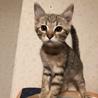 可愛い女の仔の子猫さん サムネイル2