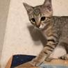 可愛い女の仔の子猫さん サムネイル3