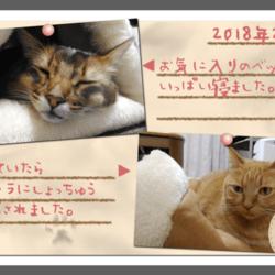 うちの猫たちのフォトアルバムを作りました(前編)