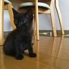 穏やかな性格の黒猫ちゃん
