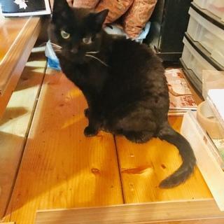 とっても人懐っこい黒猫です。