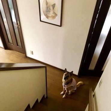 おかーさん、早くお二階から降りてきてねー?