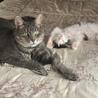 保護している子猫未来君とも仲良くできています!