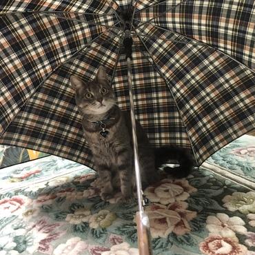 傘が好きな永遠