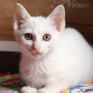 白猫の女の子!3ヶ月