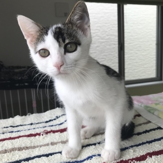 美猫です。片目にアイシャドウ入ってます!