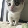 美猫です。片目にアイシャドウ入ってます! サムネイル4