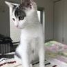 美猫です。片目にアイシャドウ入ってます! サムネイル5