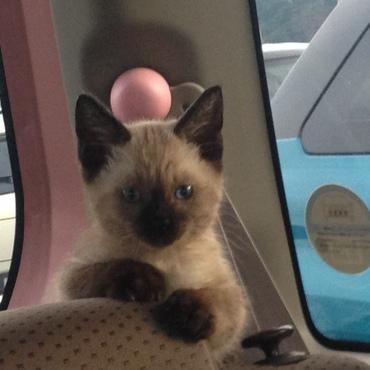 車の後部座席から見つめてる