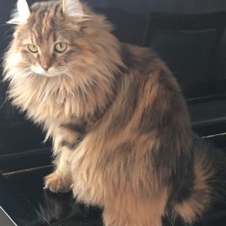 とても綺麗な猫ちゃんです