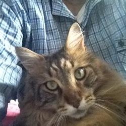 「猫の惑星」サムネイル1