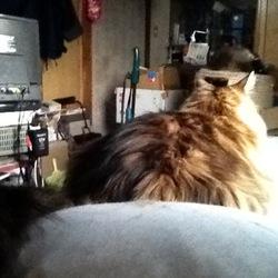 「猫の惑星」サムネイル2