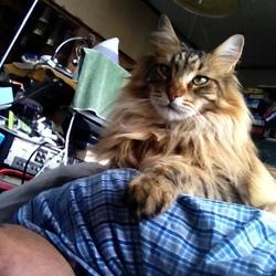 「猫の惑星」サムネイル3