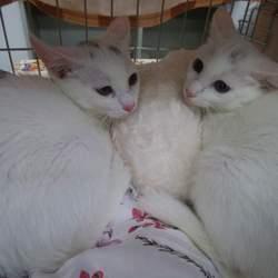 かわいい仔猫、大人猫も 猫の譲渡会 in 名古屋市緑区徳重