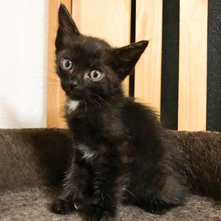 白色のポイント黒猫★イケニャンりん君