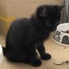 黒猫生後2ヶ月です。