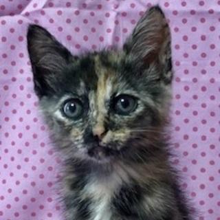 女子力高めのサビ猫ネネちゃん