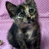 女子力高めのサビ猫ネネちゃん サムネイル2