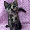 女子力高めのサビ猫ネネちゃん サムネイル5