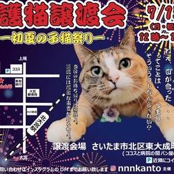 7月15日〜仔猫祭り〜譲渡会に参加します!
