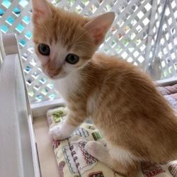 「7月15日〜仔猫祭り〜譲渡会に参加します!」サムネイル3