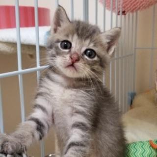 生後1か月の仔猫