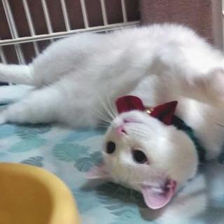 真ん丸お目めの、ポッチャリ猫ちゃんです。