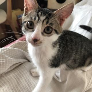 3ヶ月の子猫。大きくなりそう!