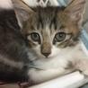 里親さん募集中 子猫5兄弟です サムネイル2