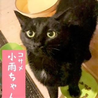 7/14 水道橋★小雨ちゃん★ツヤツヤ素敵黒女子