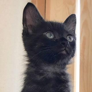 人馴れっ子ゴロゴロ黒猫★cuteなミロ君
