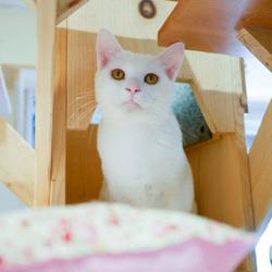 保護猫譲渡会@埼玉県蓮田市 サムネイル3