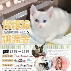 保護猫譲渡会@埼玉県蓮田市