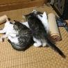 里親さん募集中 子猫5兄弟です サムネイル6
