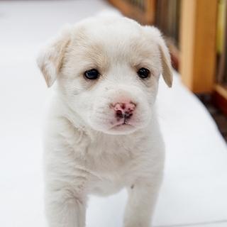 なんて可愛い! 2か月にならない仔犬たちです。
