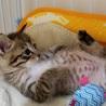 生後1か月の仔猫☆ サムネイル2