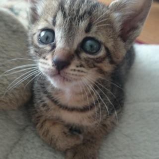 生後1カ月の子猫ちゃん3匹