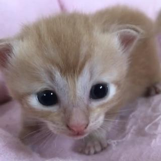 トラ猫baby