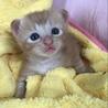 トラ猫baby サムネイル3