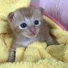 トラ猫baby サムネイル4