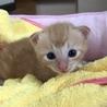 トラ猫baby サムネイル5