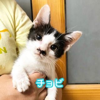 チョビヒゲのかわいい男の子猫