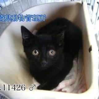 可愛い黒猫の男の子、家族に迎えて下さい!